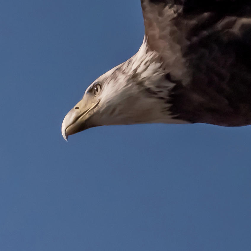 Eagle Vision by Terry DeLuco