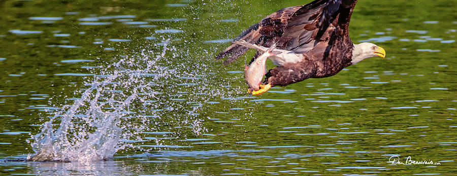 Eagle With Catch 1198 Photograph