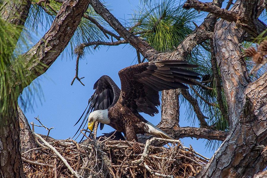 Eagle's Nest by John A Megaw