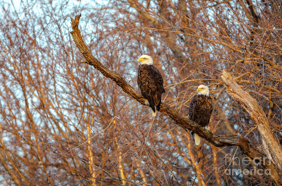 Eagles Watching the Sunset by Steven Santamour