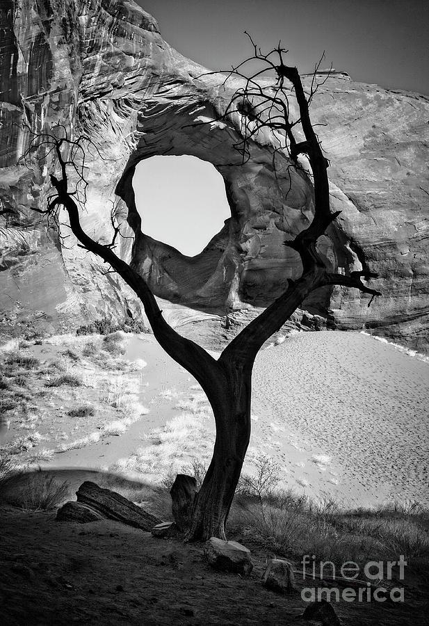 Ear of the Wind by Scott Kemper