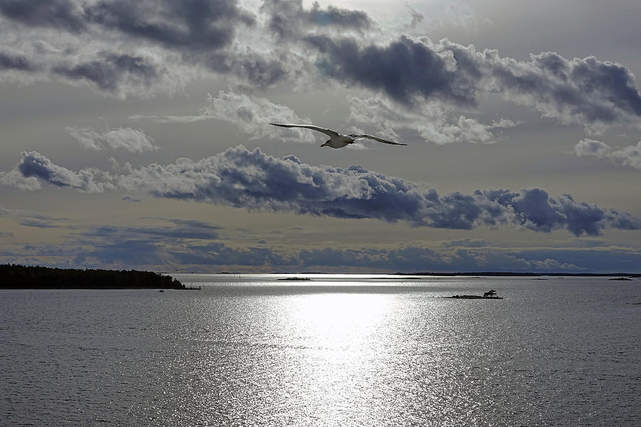 Early Evening Sail With Bird In Flight outside Of Stockholm Sweden by Richard Rosenshein