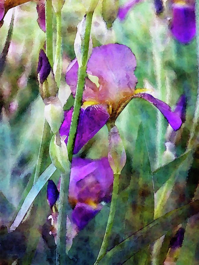 Early Irises 6818 IDP_2 by Steven Ward