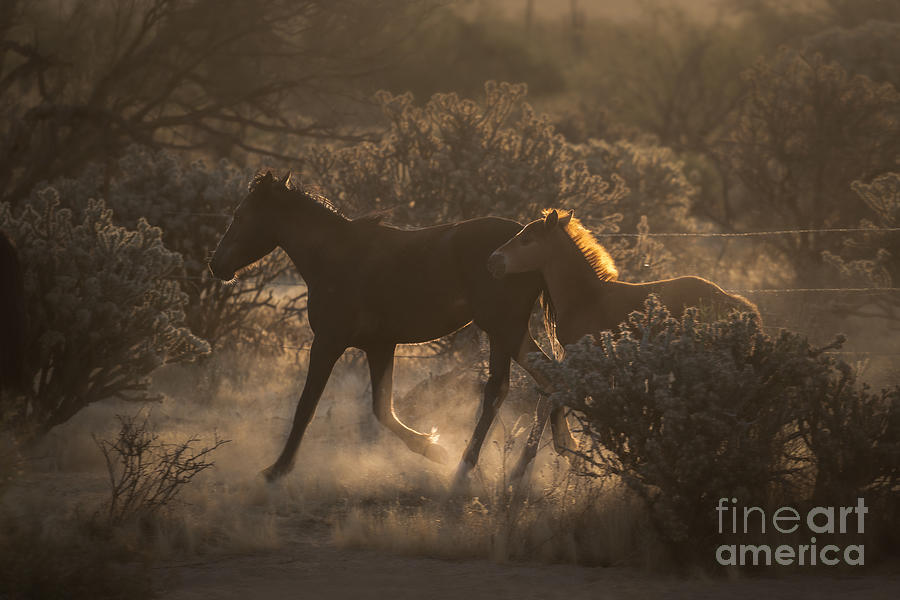 Early Morning River Rendezvous by Lisa Manifold