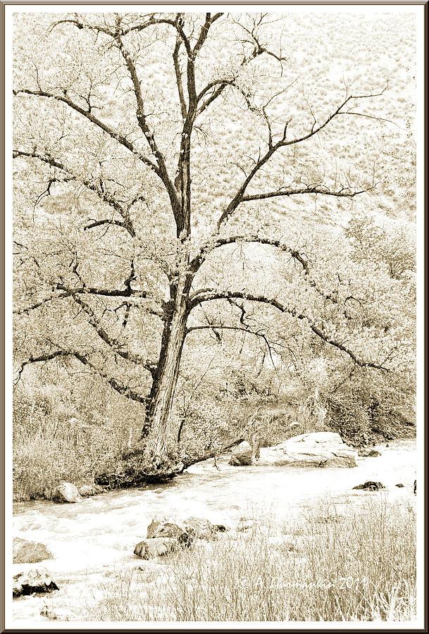 Early Spring Boulder Creek Colorado by A Gurmankin