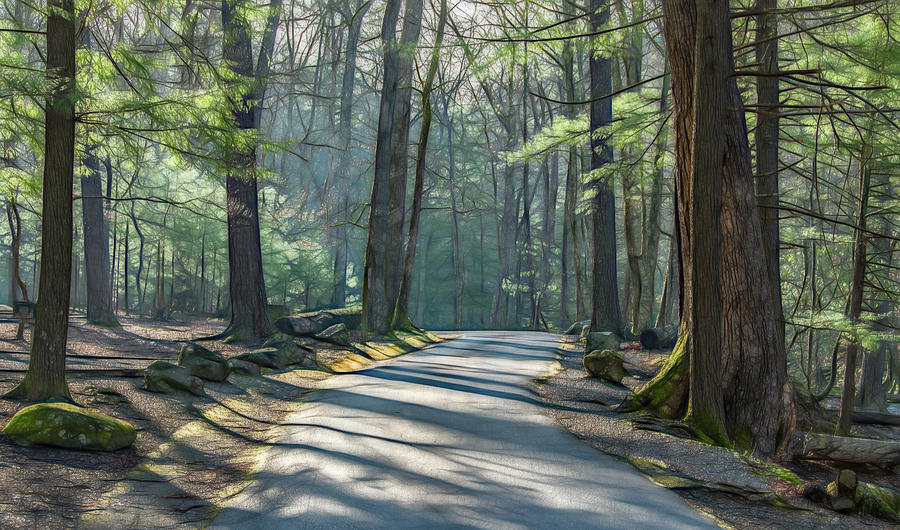 Early Spring Drive Through the Forest by Marcy Wielfaert