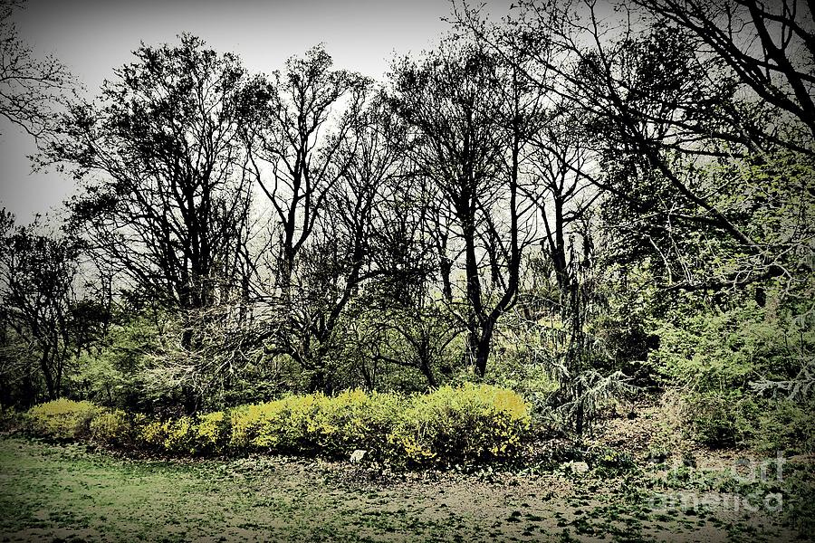 Early Spring In Fort Tryon Park Photograph