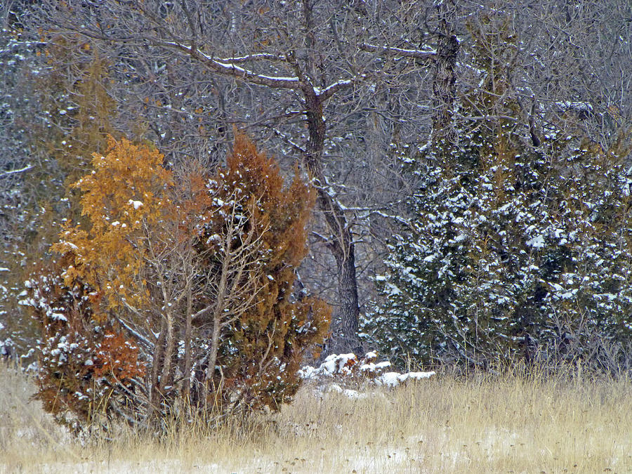 North Dakota Photograph - Early Winter On The Western Edge by Cris Fulton