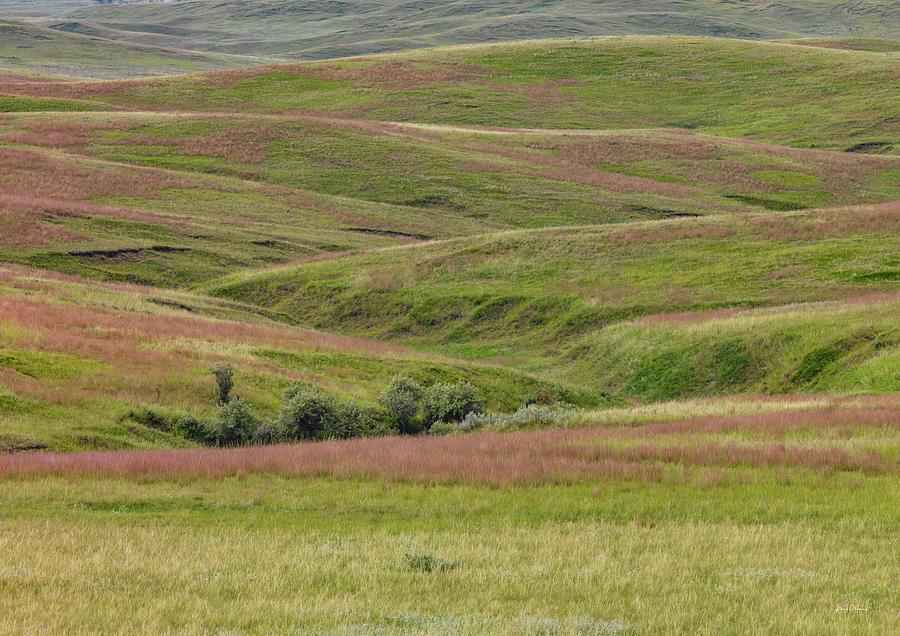 Nature Photograph - East Montana Grasslands by Leland D Howard