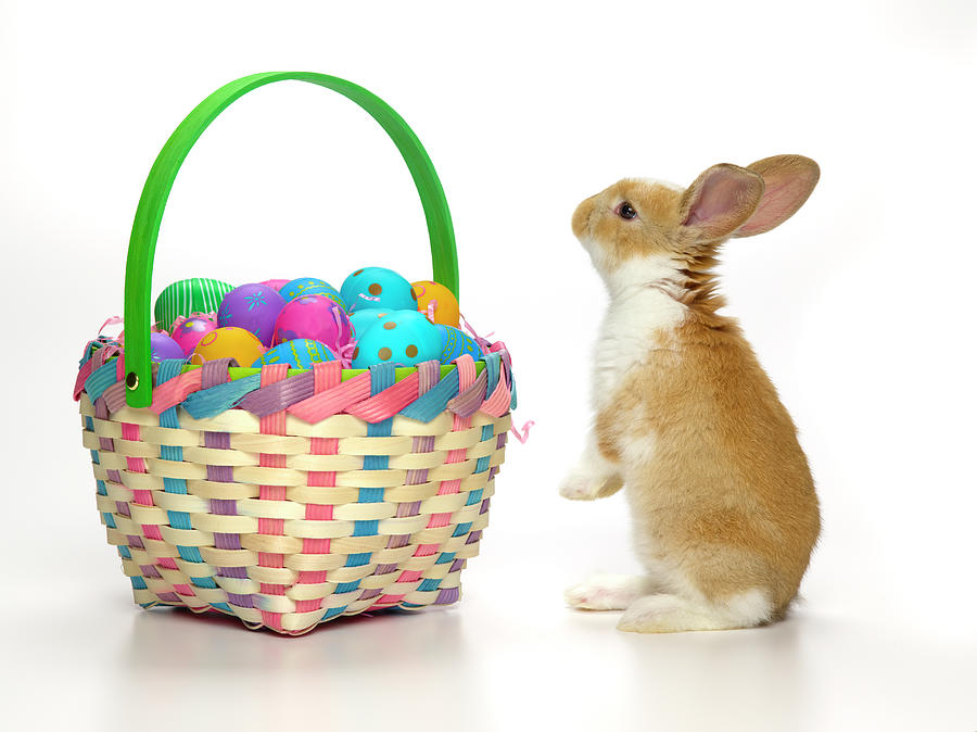 Easter Bunny And Basket Of Coloured Eggs Photograph by Don Farrall
