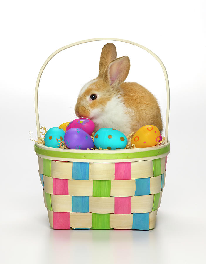 Easter Bunny In A Basket With Coloured Photograph by Don Farrall