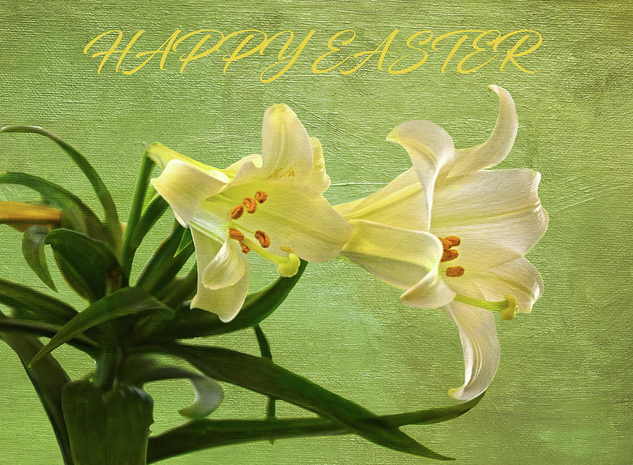 Easter Lilies Digital Painting With Text by Sandi OReilly