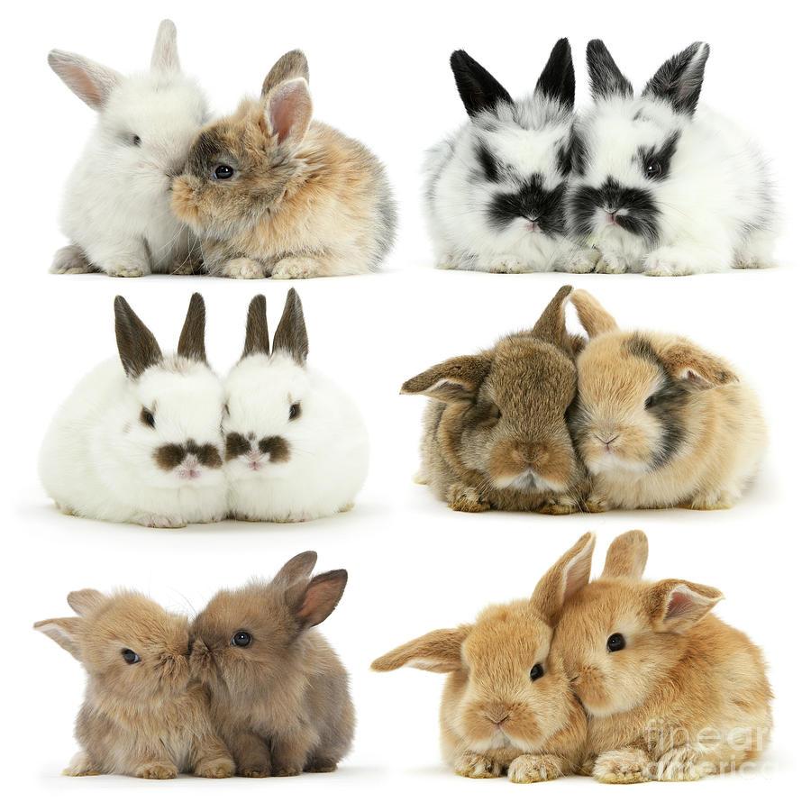 Easter Love Bunnies by Warren Photographic