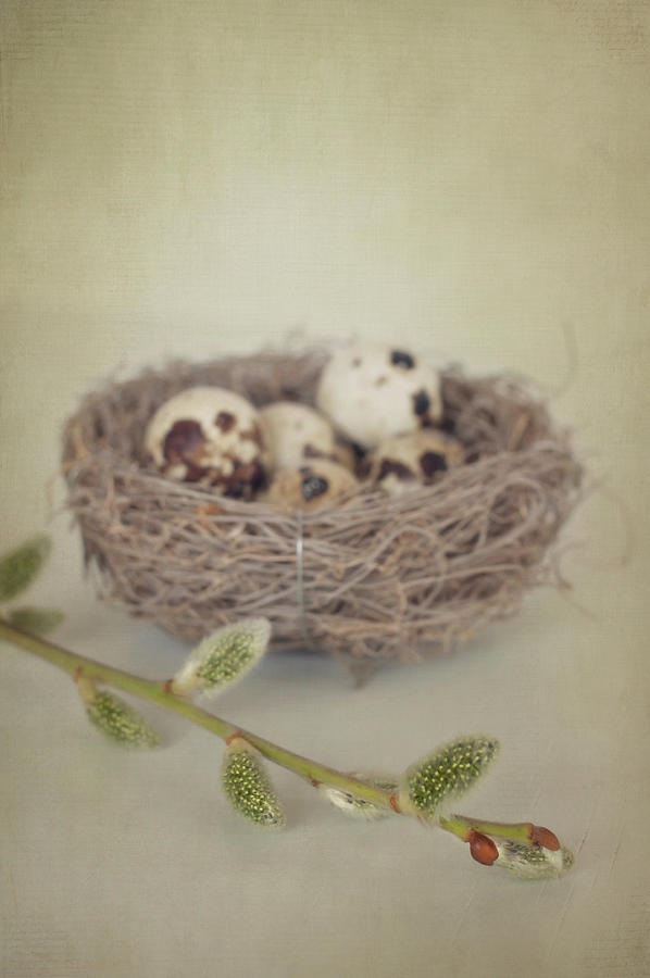 Easter Nest Photograph by Photo By Stefanie Senholdt