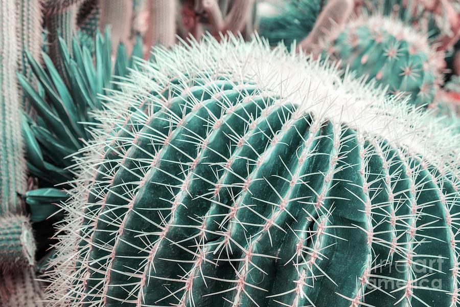 Echinocereus Cactus by Marina Usmanskaya