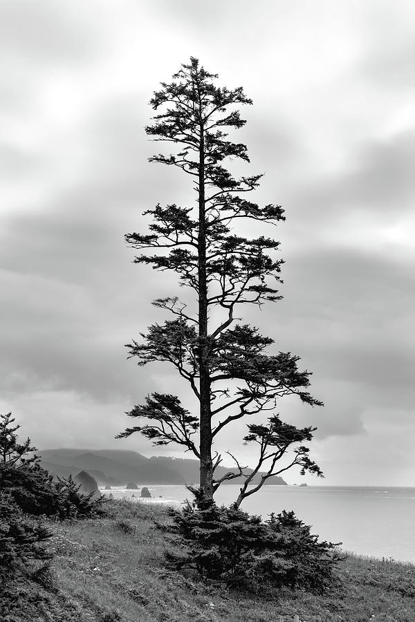 Ecola Park Tree by Mike Centioli