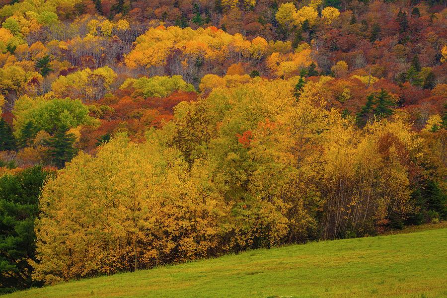 Edge Of Autumn Glory by Irwin Barrett