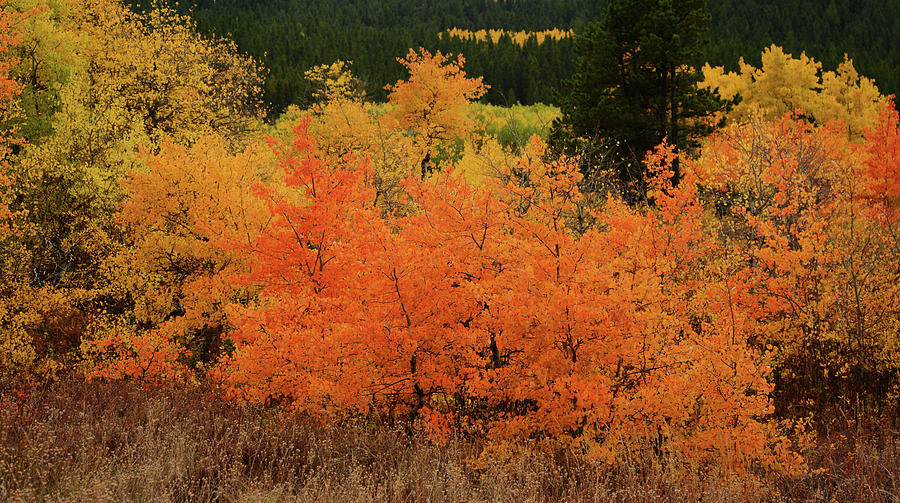 Edge of Autumn by Whispering Peaks Photography