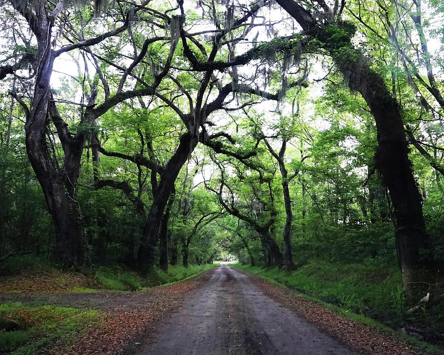 Edisto Island byway by CARL SHEFFER