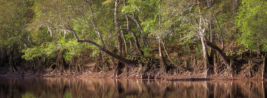 Edisto Riverbank by Patrick M Lynch