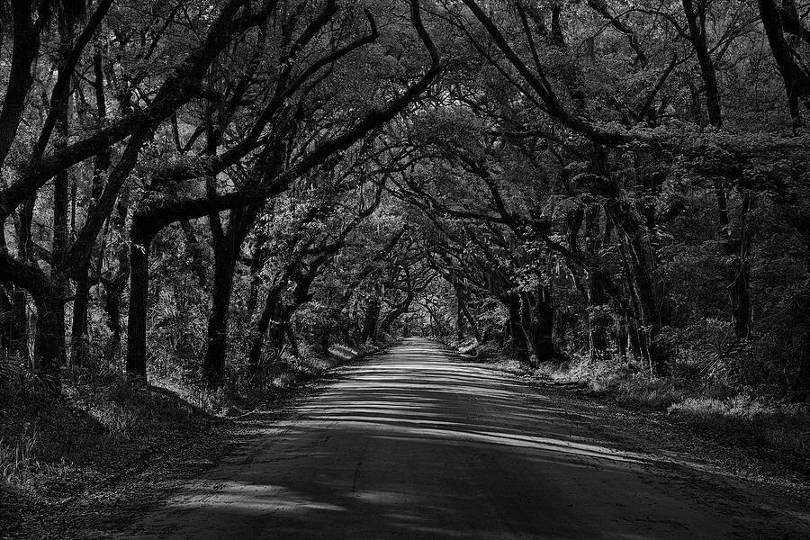 Edisto Tunnel of Trees by Jon Glaser