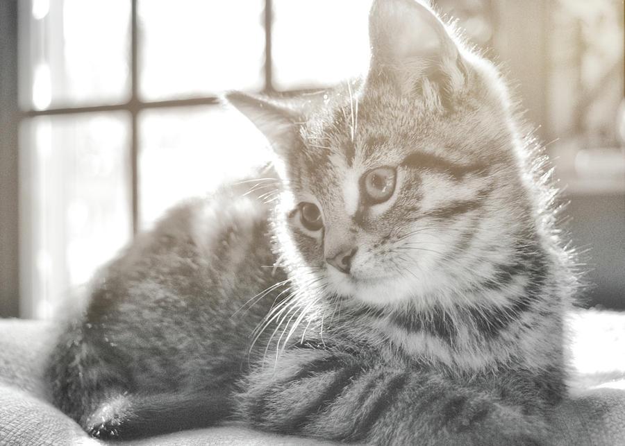 Kitten Photograph - Edward by JAMART Photography