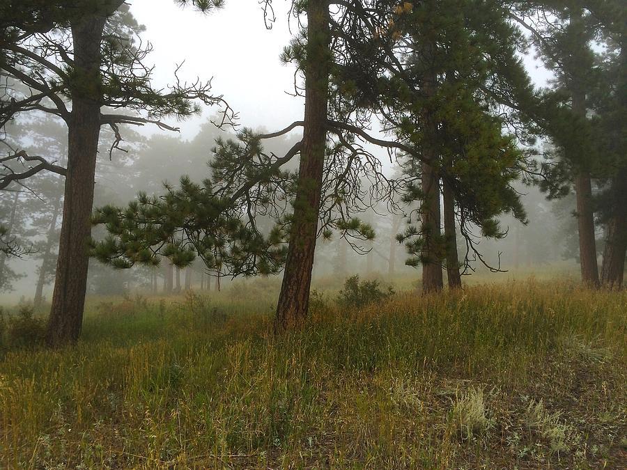 Eerie Woodland by Dan Miller