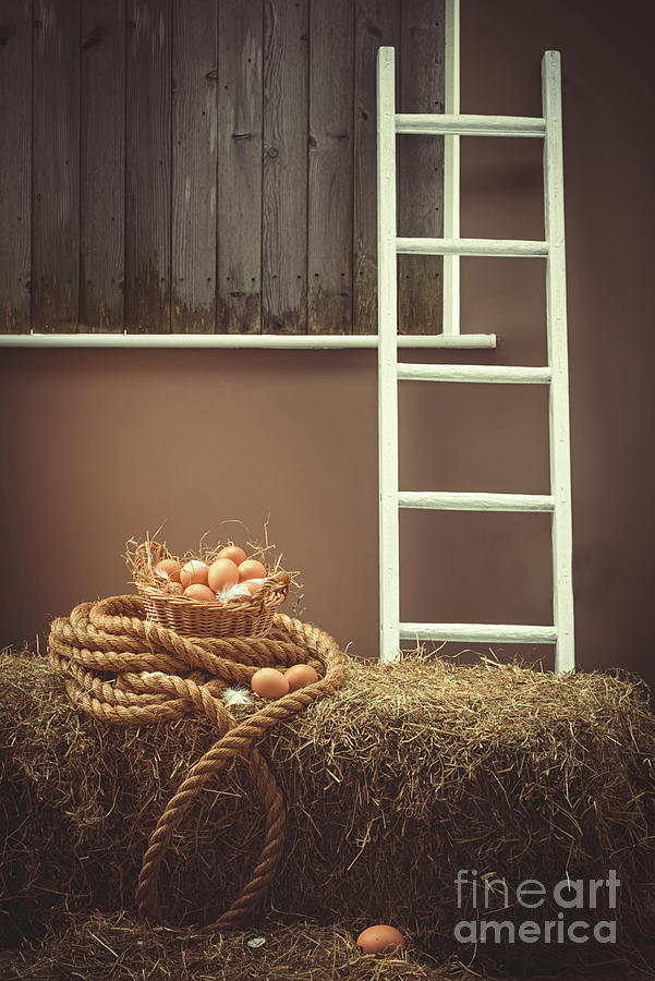 Eggs Photograph - Eggs In Barn by Amanda Elwell