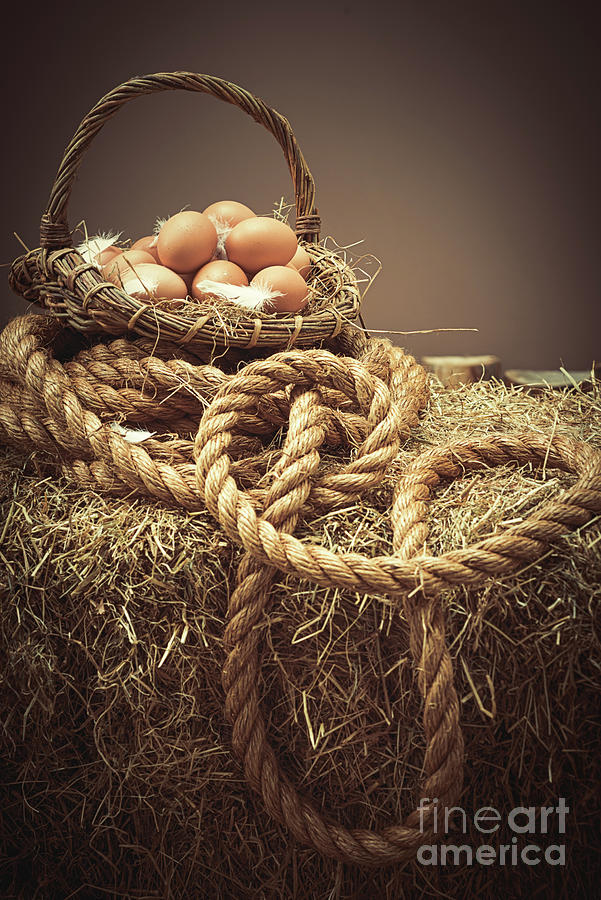 Eggs Photograph - Eggs In Basket by Amanda Elwell