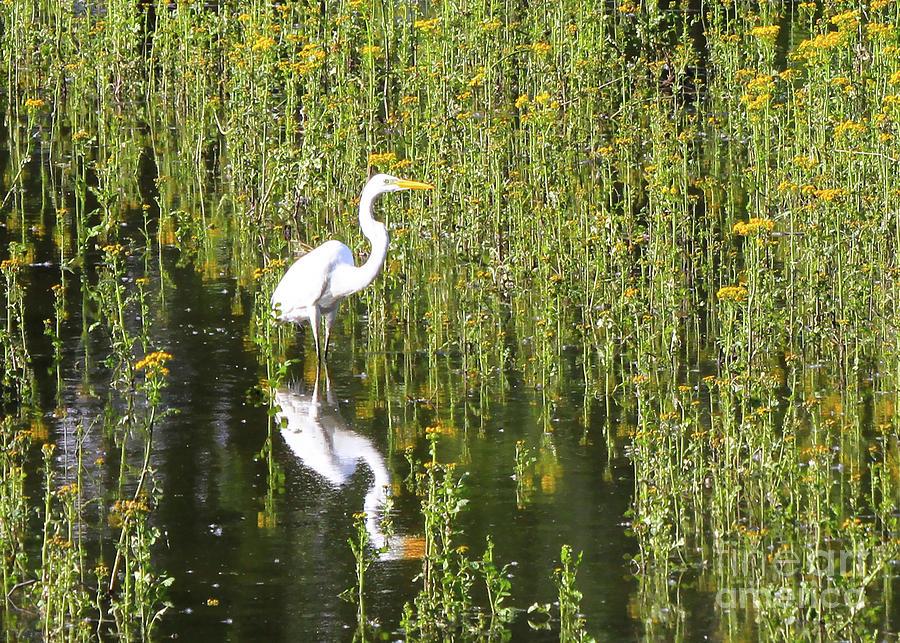 Egret 1 by Paula Guttilla