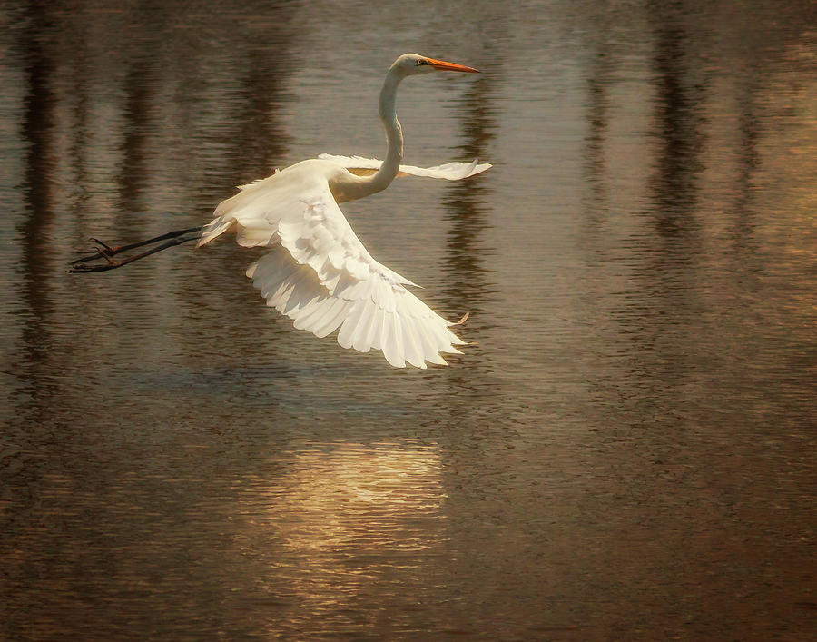 Egret 6 by Richard Kopchock