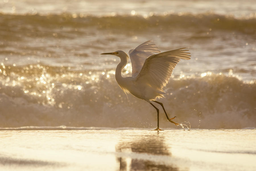 Egret At The Beach On A Sunny Morning by Steven Sparks