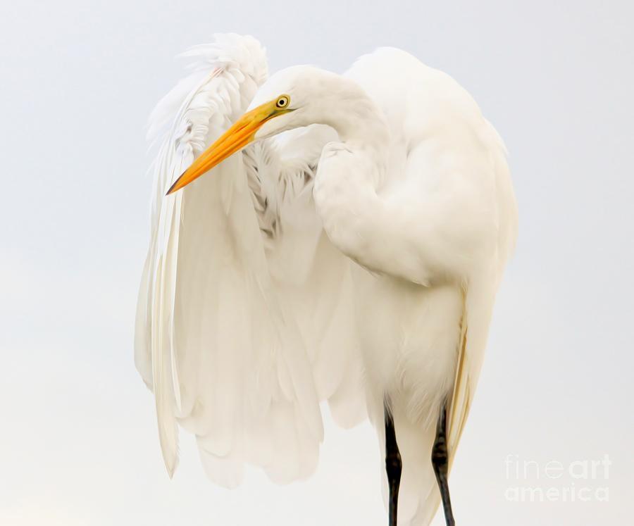 Egret Feathers by Paulette Thomas