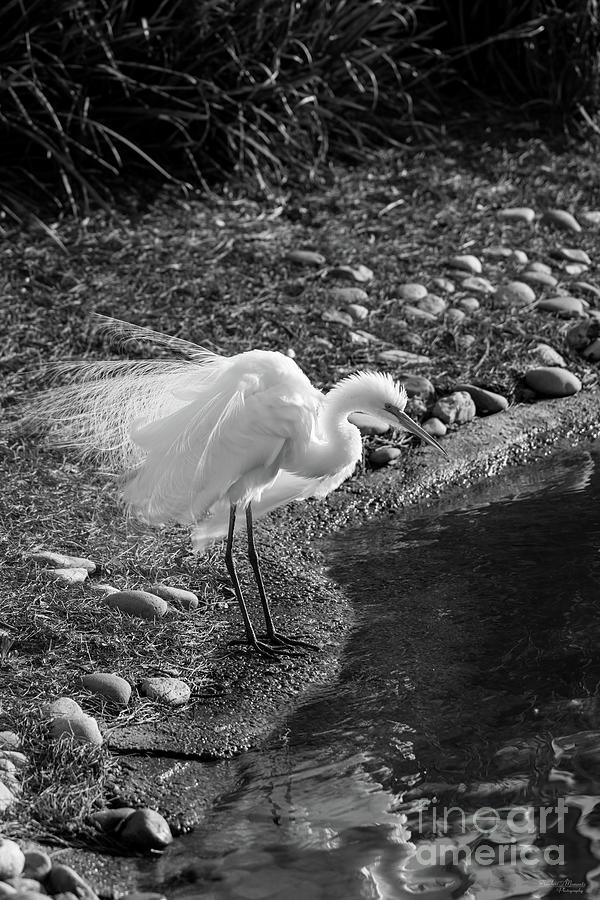 Egret Fluff Grayscale by Jennifer White