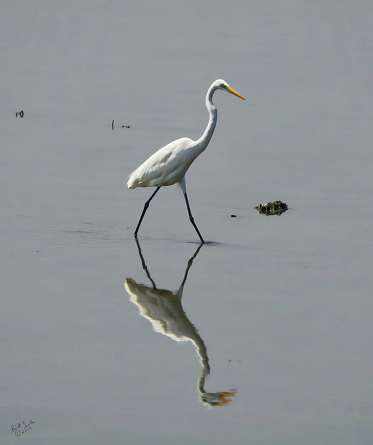 Egret Photograph - Egret In A Pond by Rick Lawler