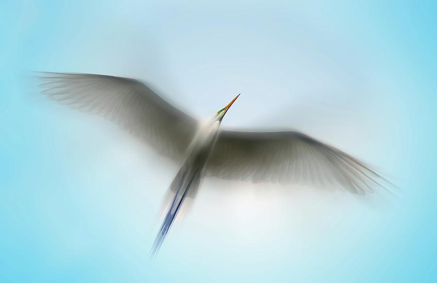Egret In Motion by Scott Bourne