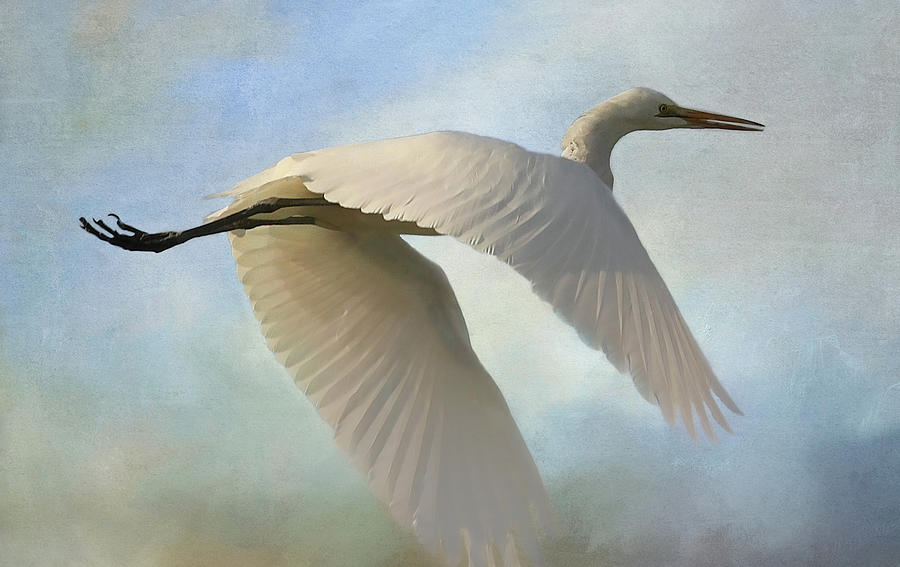 Egret In The Clouds by HH Photography of Florida