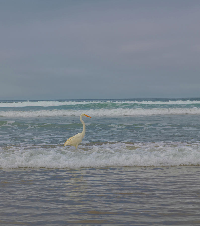 Egret In The Surf Photograph