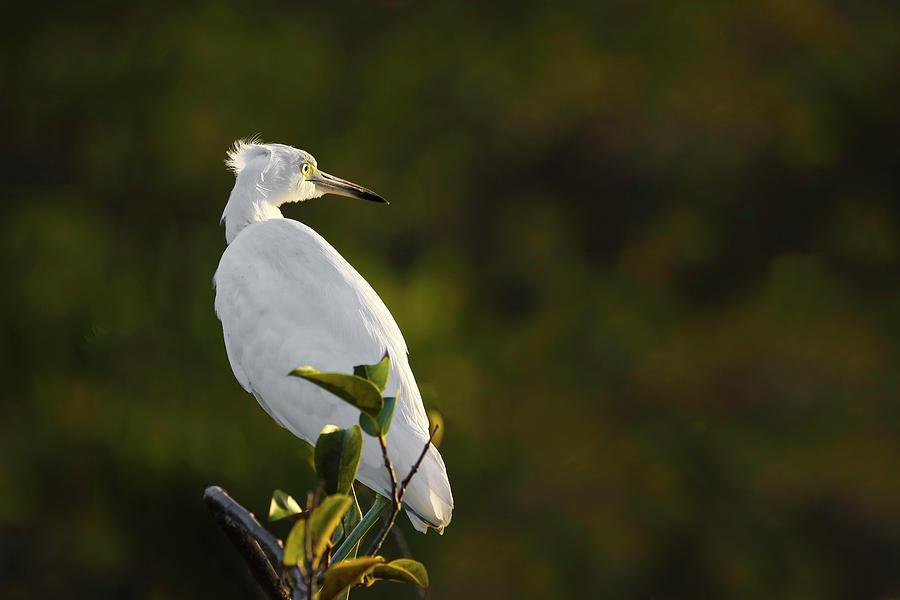 Egret by Juergen Roth