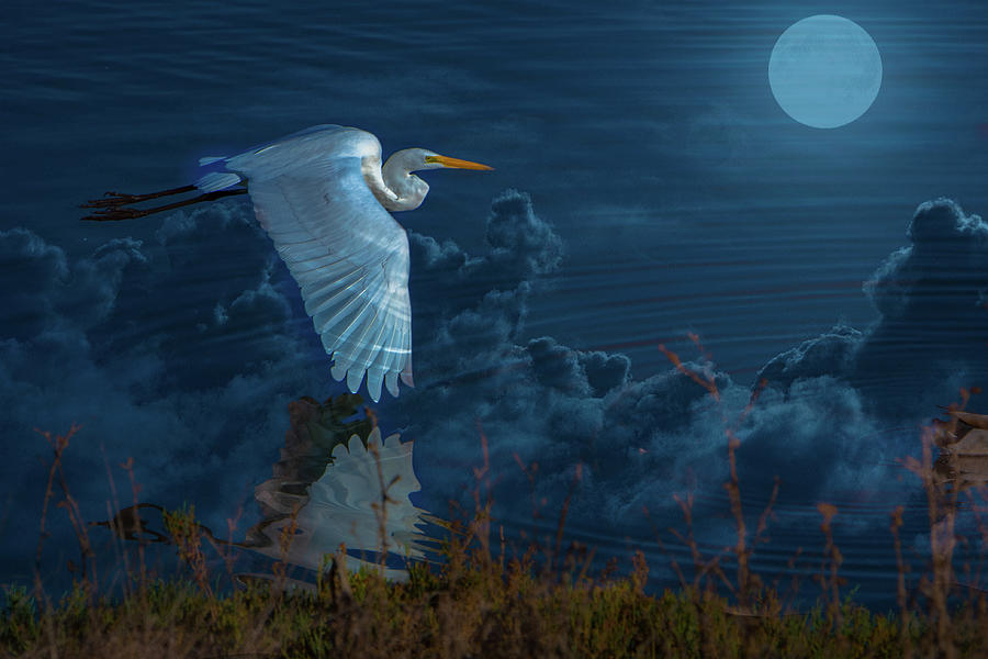 Egret Over The Moon Photograph