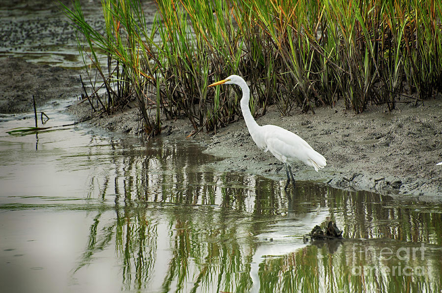 Egret Stare by Ruth H Curtis