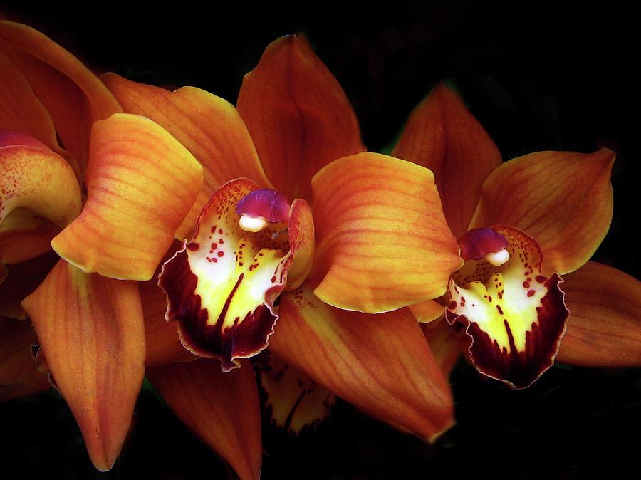 Orchids Photograph - Orange Cimbidium Orchid by Jessica Jenney