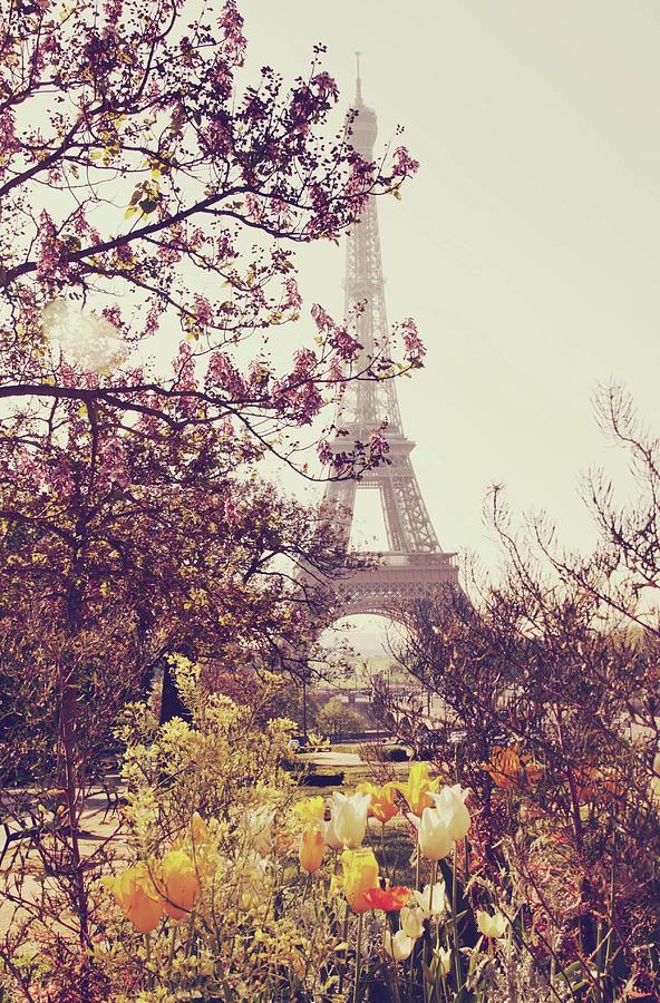 Eiffel Tower, Paris Photograph by Liz Rusby