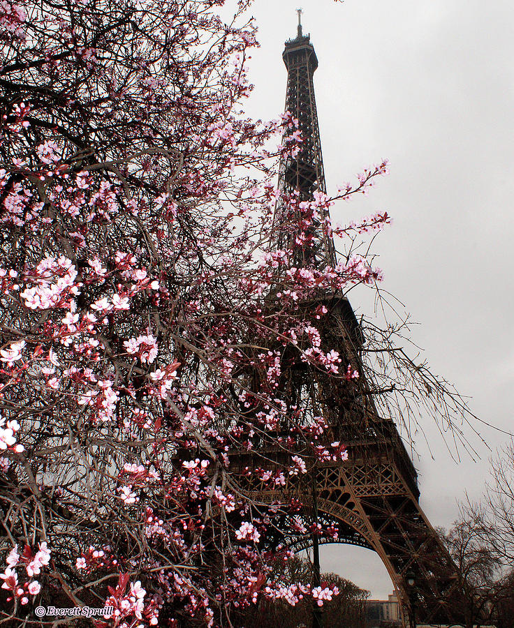 Eiffel Tower with blossoms by Everett Spruill