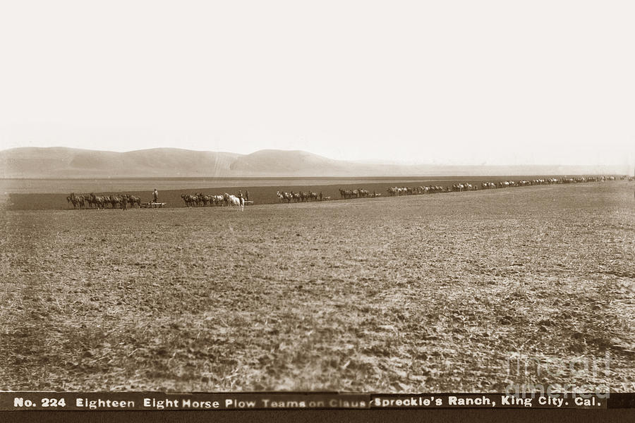 Eighteen Eight Horse Plow Teams on the Claus Spreckle's Ranch, King City by California Views Archives Mr Pat Hathaway Archives