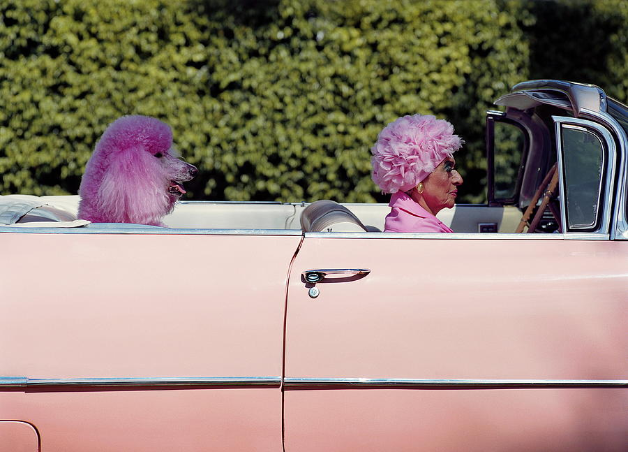 Elderly Woman And Pink Poodle In Pink Photograph by Tim Macpherson