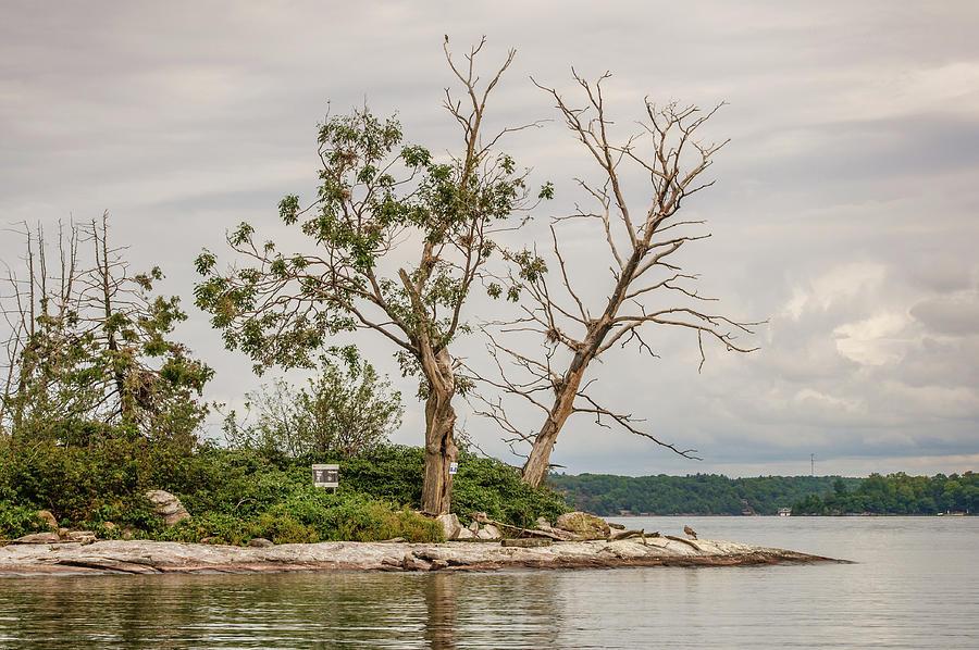 Eleanor Island by Andrew Wilson