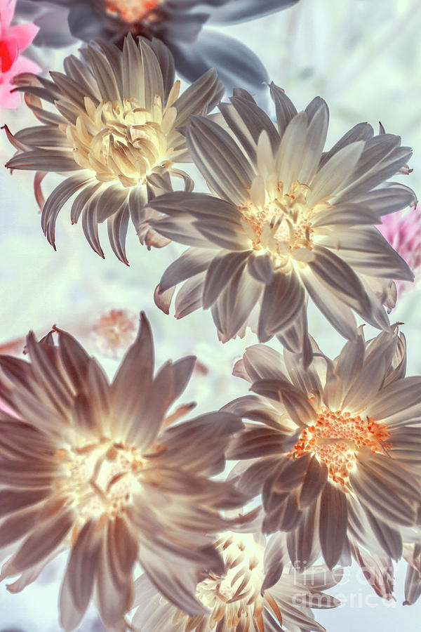 Flowers Photograph - Electric Beauty by Jorgo Photography - Wall Art Gallery