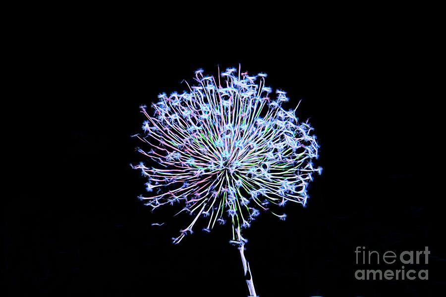 Electrified Allium by Karen Silvestri