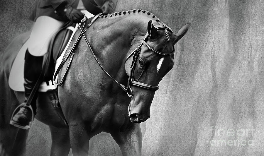 Elegance - Dressage Horse Large by Michelle Wrighton